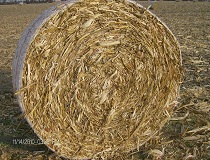 5x5 Round Bale from Windrow. Note High Husk / Cob Number